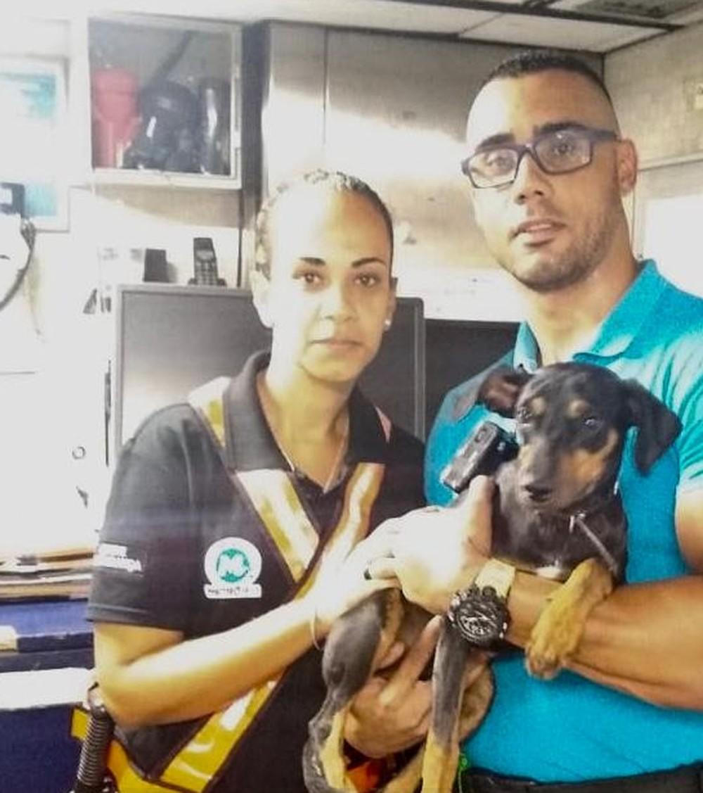 Photo of Cachorro invade linha do metrô do Rio e anda mais de 7 km