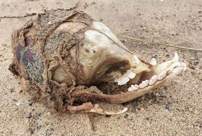 Photo of Arqueólogos encontram caveira de ET