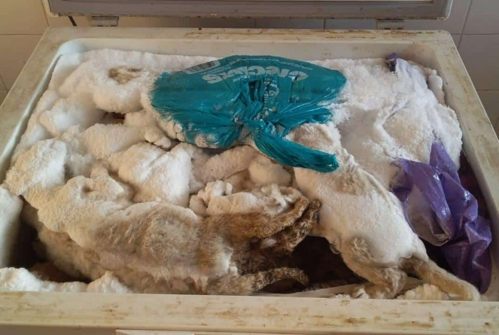 Photo of Mais de 20 filhotes de leão são encontrados dentro de freezer